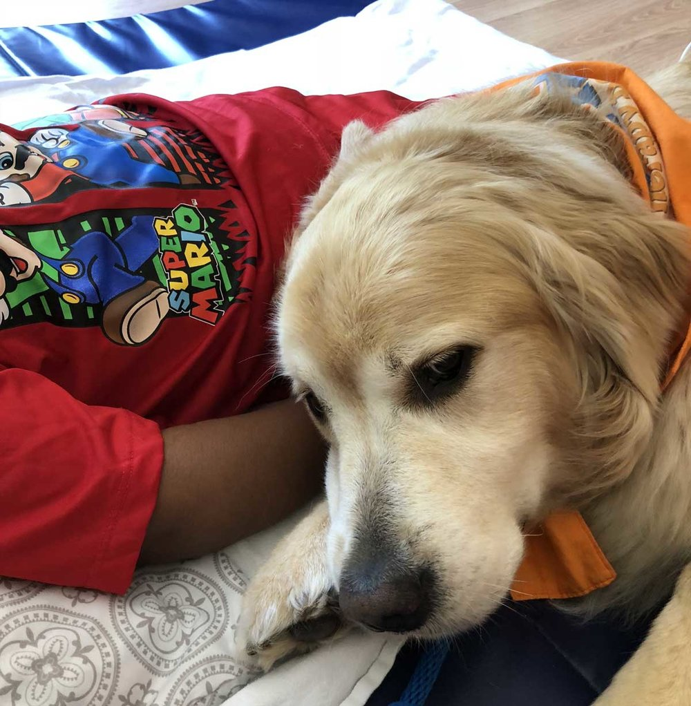 Golden Retriever Teddy visits with his friend at Pedia Manor.