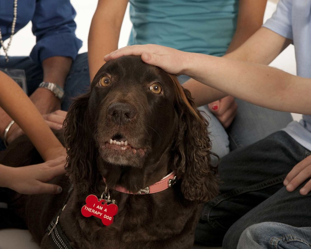 Roxy supplied an abundance of comfort and love to the children who knew her.
