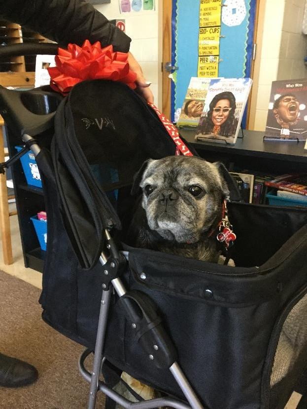 Gus enjoying his new stroller!
