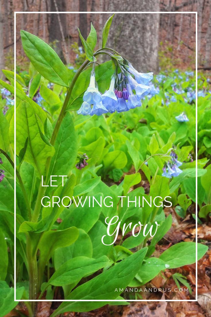 Let Growing Things Grow.png