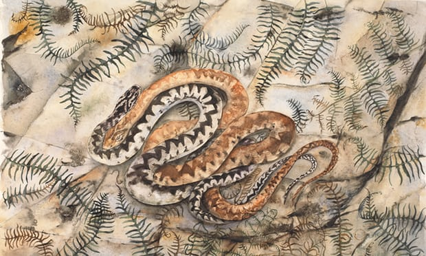 Adder from The Lost Words. Photograph: Jackie Morris.