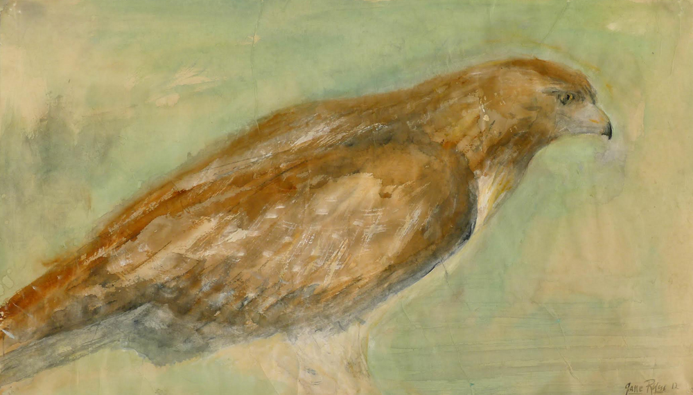 """Richards Hawk,"" 2012 Korean watercolor on Japanese hand-made rice paper 16 x 28 inches"