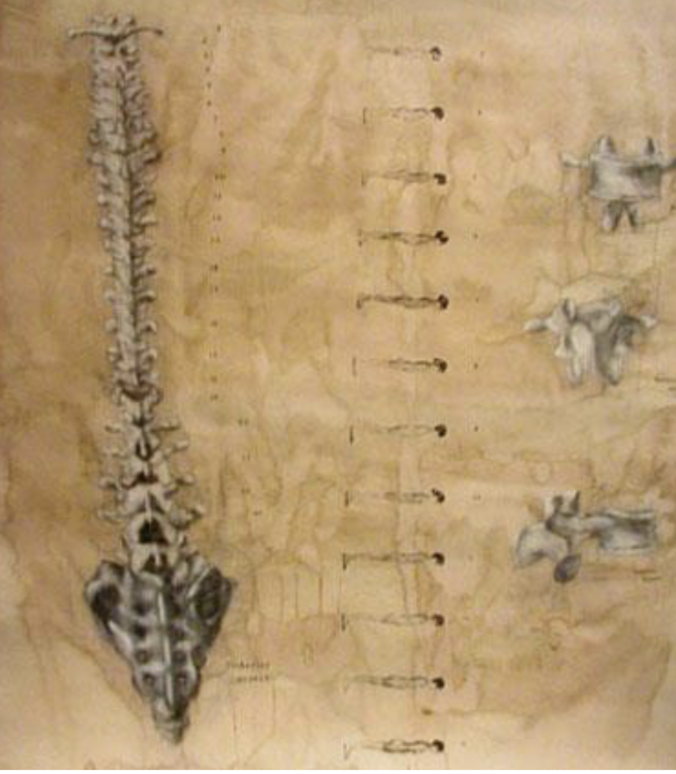Copy of Vertebral