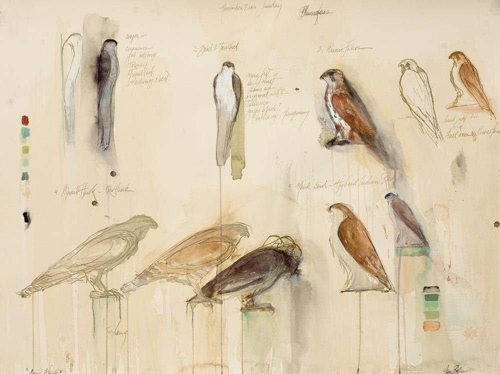 """Quail Hawk Study,"" 2011 Korean watercolor 22 x 30"