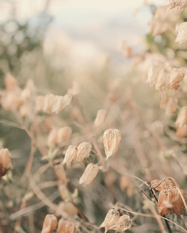 The softest, dreamiest seed pods from an adventure weeks ago. || I've been a little quiet for the past week— it's been pouring down rain here for days on end. That, paired with dental surgery and the general fatigue of being a compassionate human being these days, has me wishing for warmth and light and more easy days of exploration like this one. ⛅️