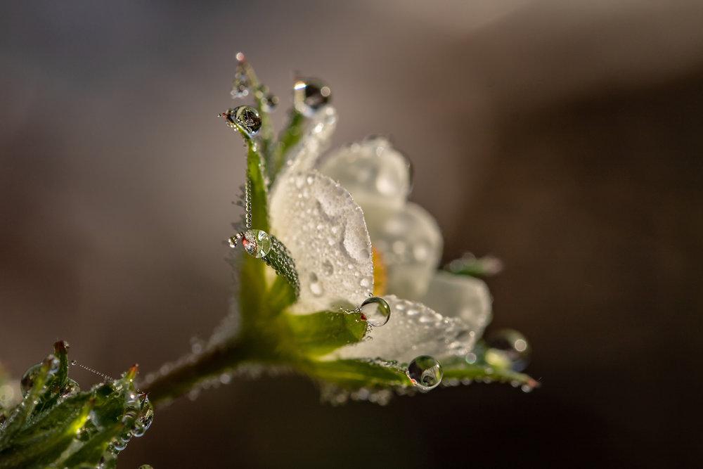 raindrop-blossom.jpg