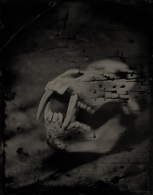 dragonskull.jpg