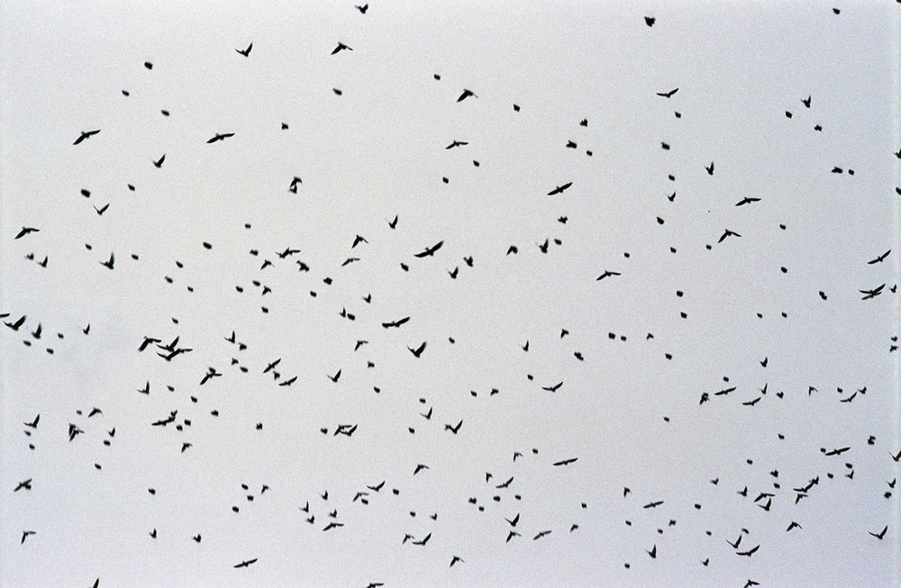 big_flock1.jpg