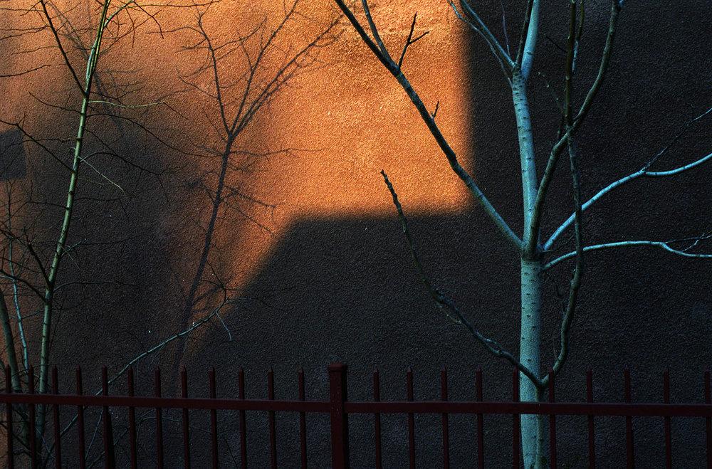 birch_shadow.jpg