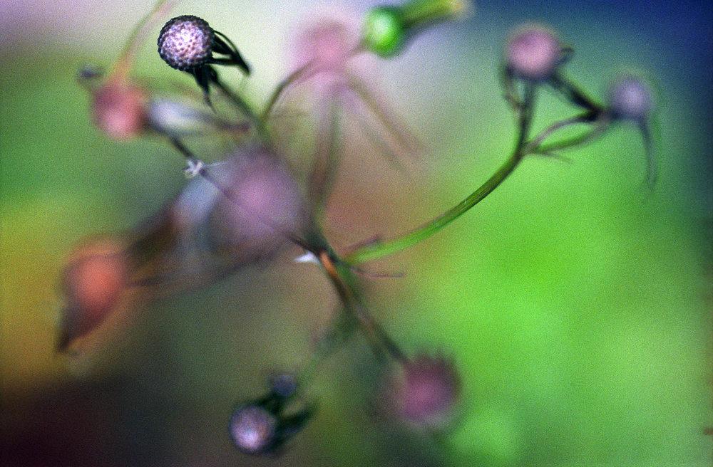 dreamflowers15.jpg