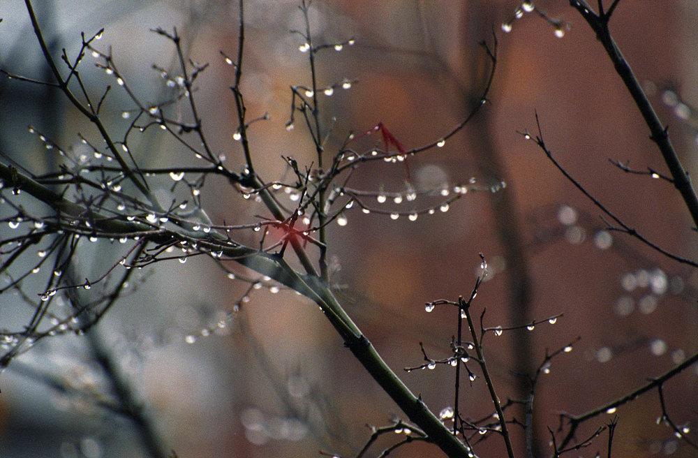 dreamflowers30.jpg