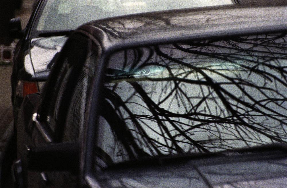 windshield_tree.jpg