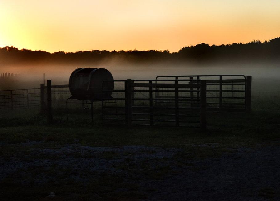 NEO Miller Livestock 44x54.76@72.jpg