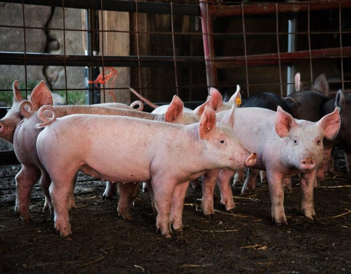 NEO Miller Livestock 2.jpg