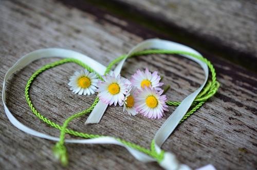 daisy-3392654_640.jpg
