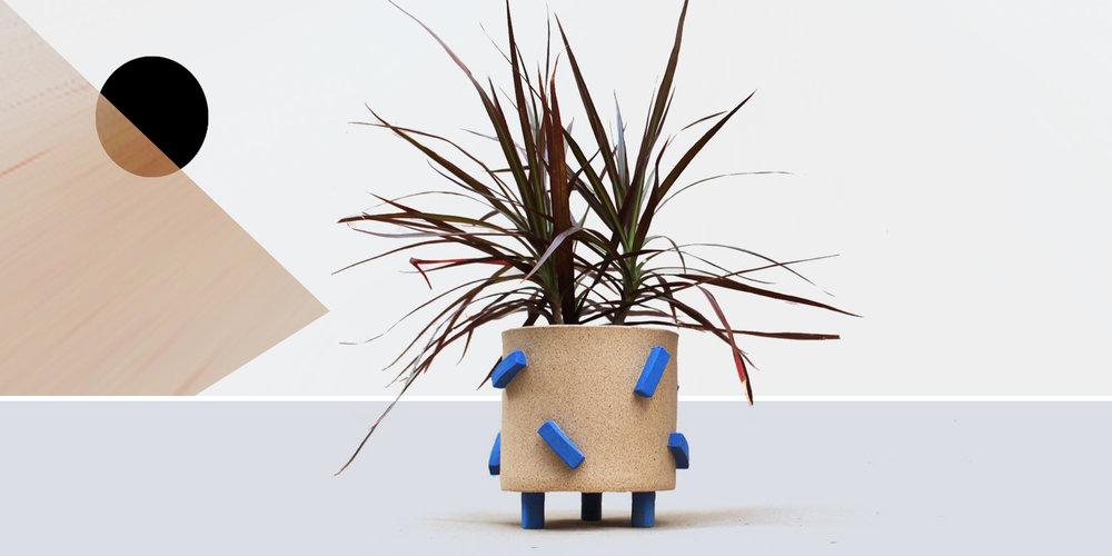 plant6.jpg