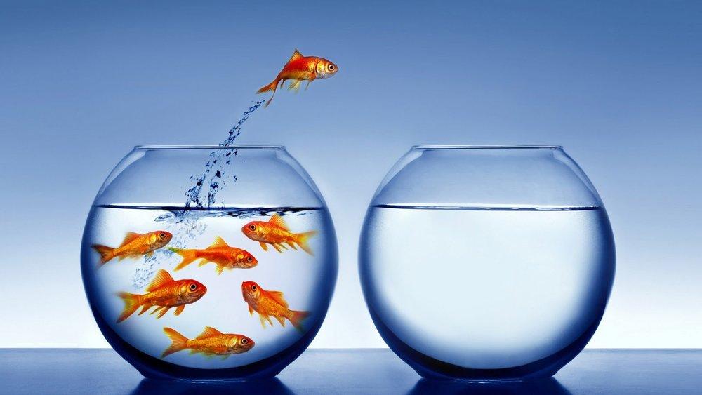 Free Will Goldfish.jpg