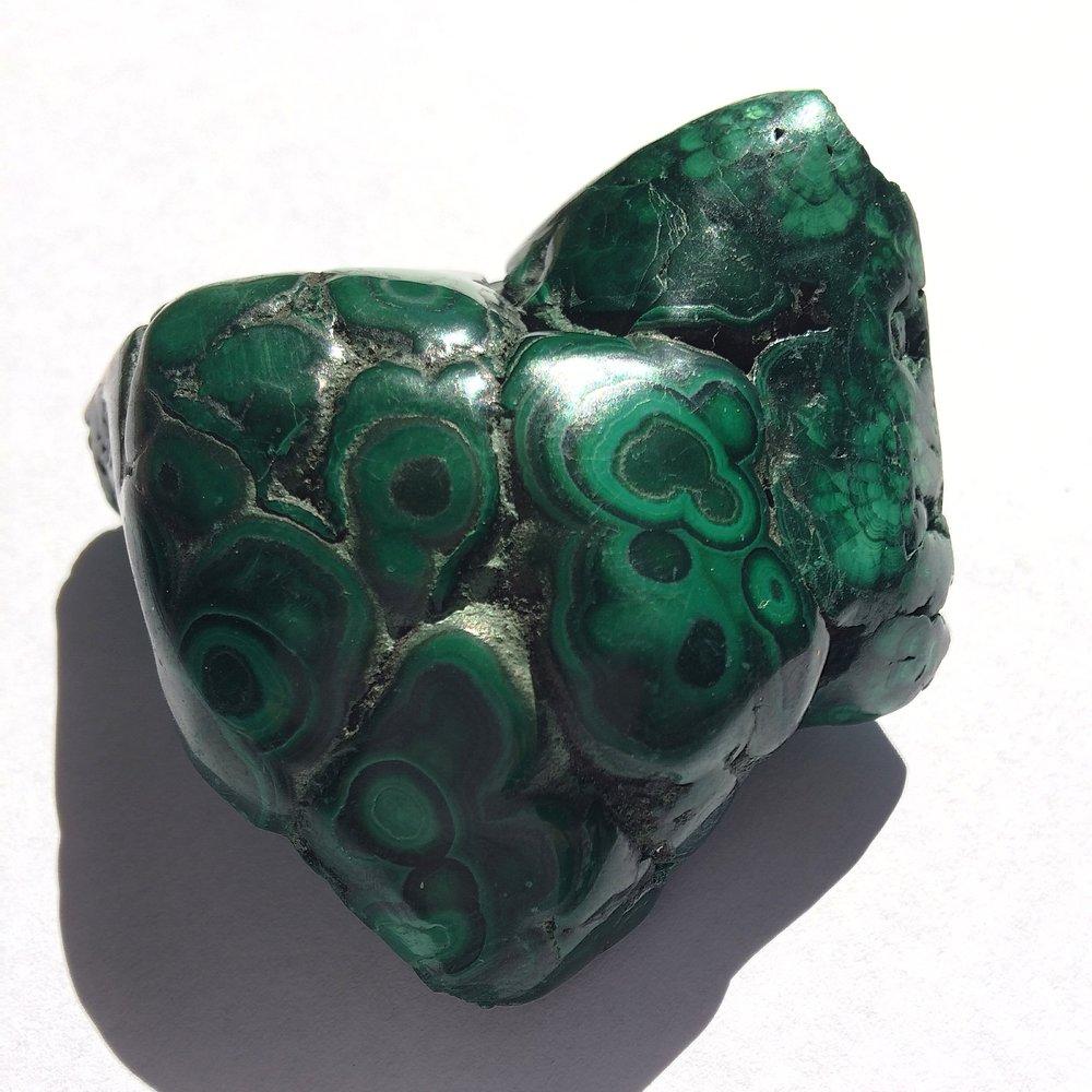 malachite butterfly / krista-mitchell.com