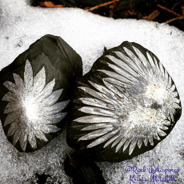 Chrysanthemum stones / krista-mitchell.com