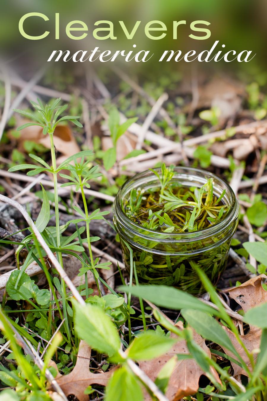 TerraSura-Herbs-Cleavers-3291.jpg