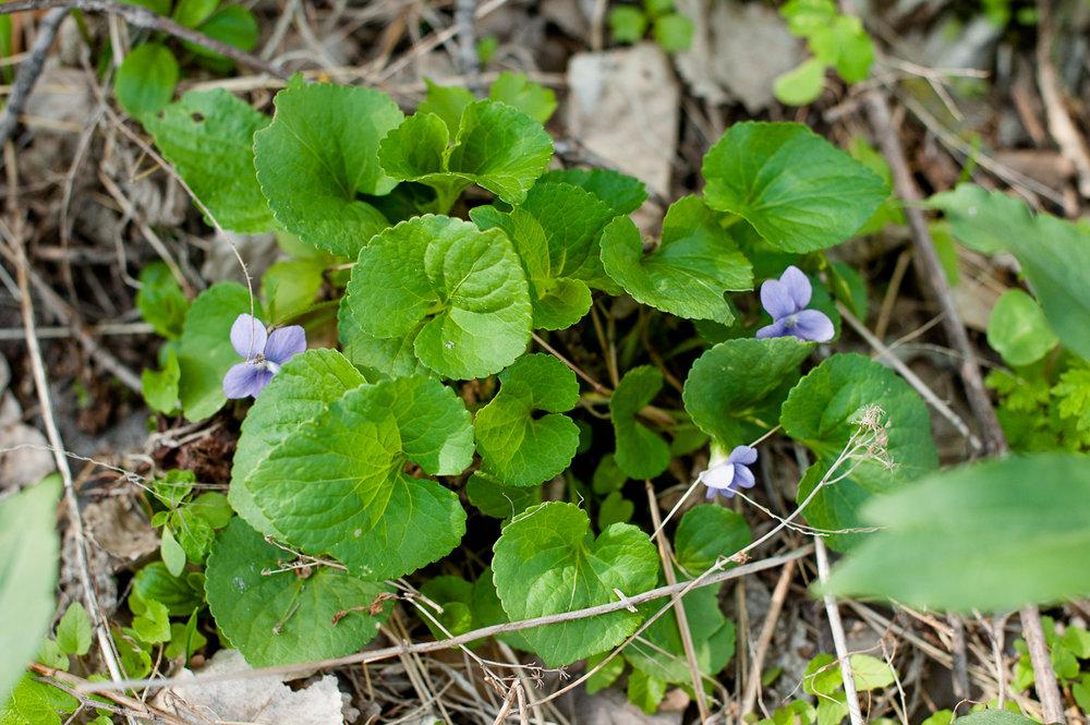 TerraSura-Herbs-Web-3267.jpg