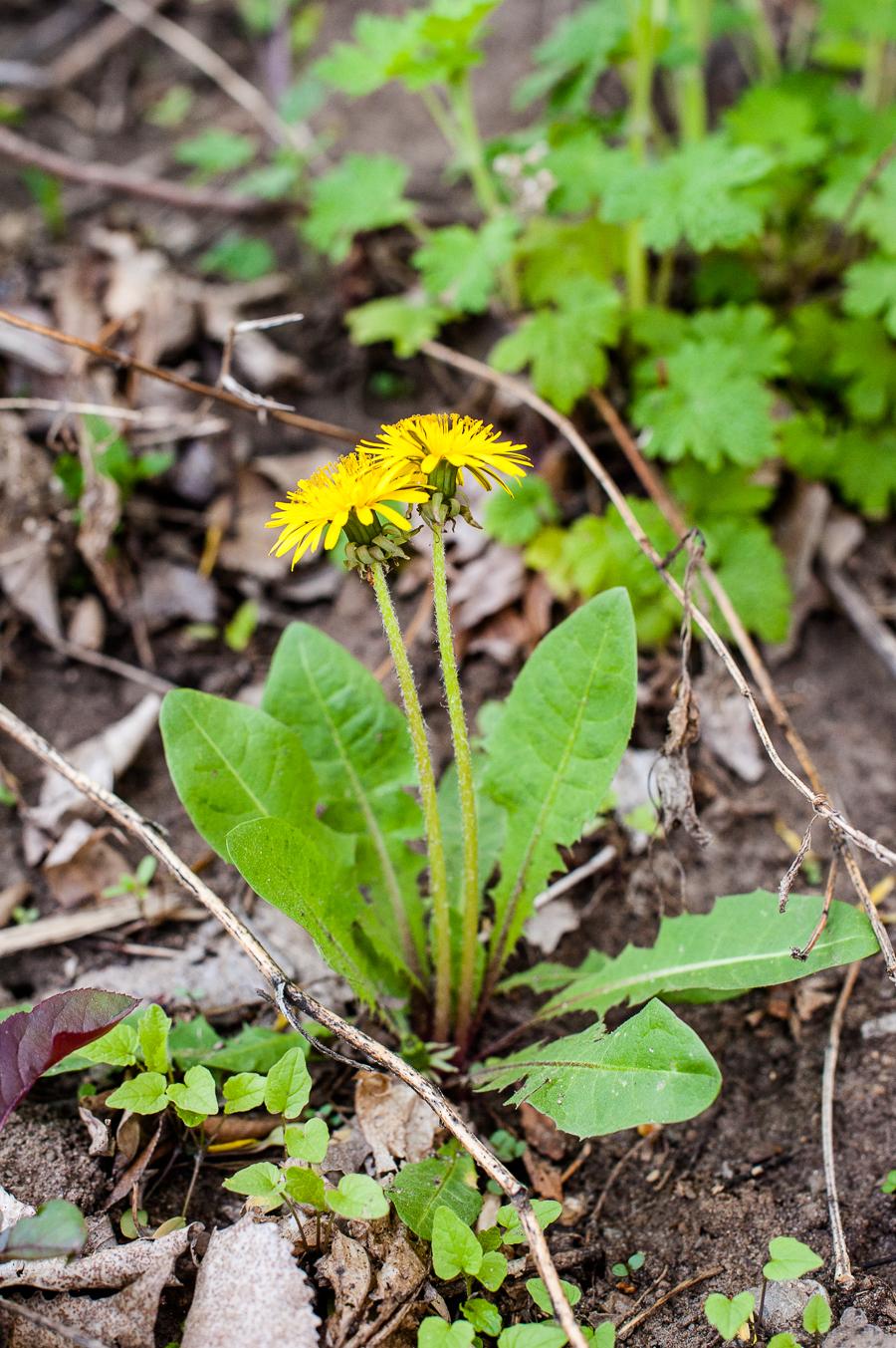 TerraSura-Herbs-Web-3319.jpg