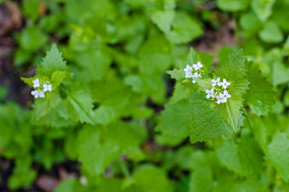 TerraSura-Herbs-Web-3461.jpg
