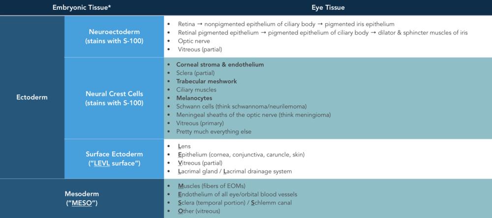 Embryologic tissue derivatives.png
