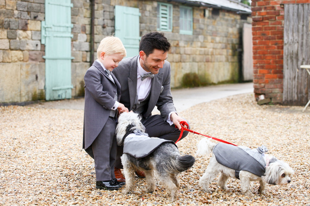 Dog Suits To Match The Groom