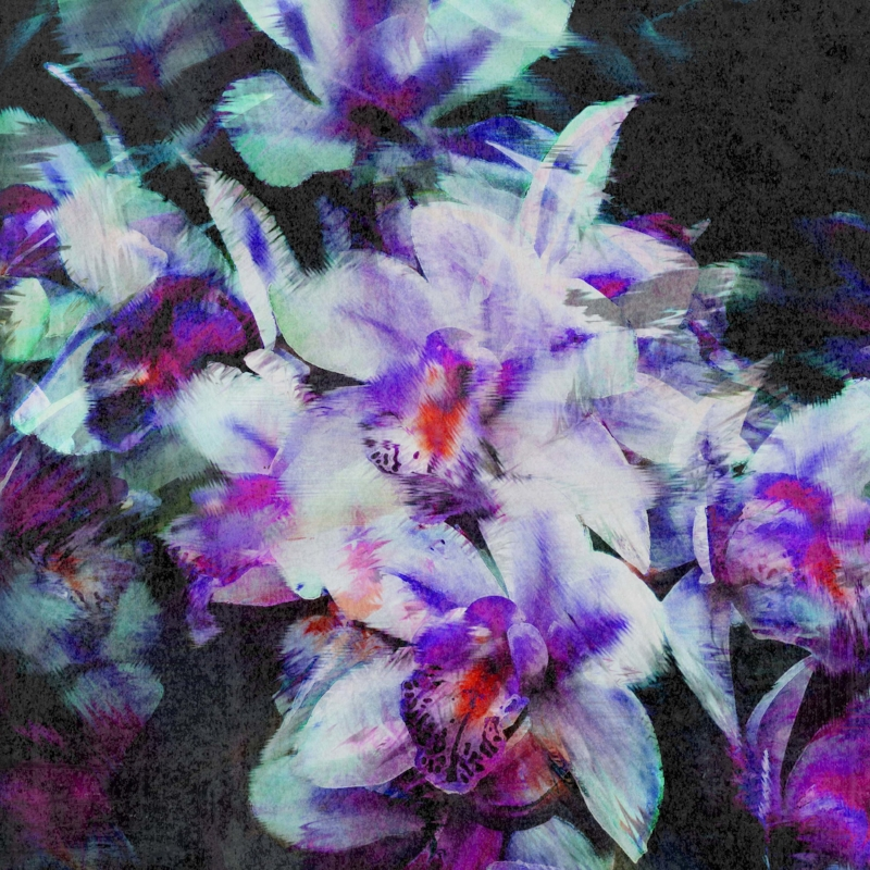 Inspired by the Orchid House at Kew Gardens: Distorted Orchids