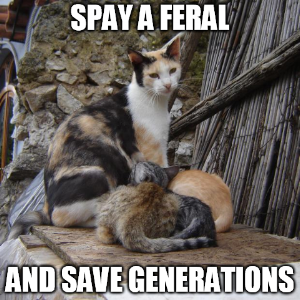 Feral cat pic 2.png