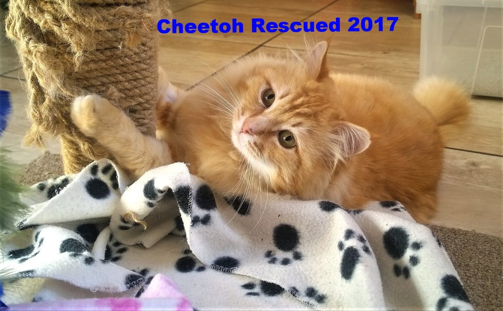 Blog August 2018 Cheetoh 2.jpg