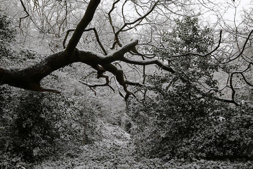 a quiet darkness.5.jpg