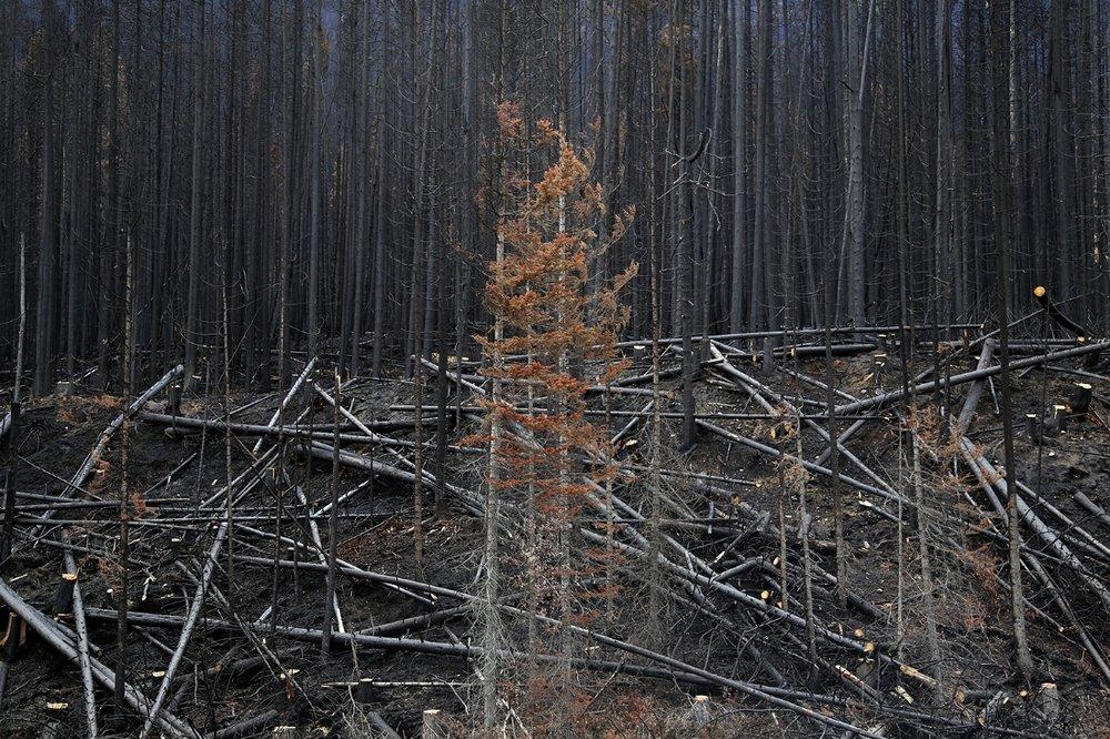 Burnt forests, British Columbia, Canada