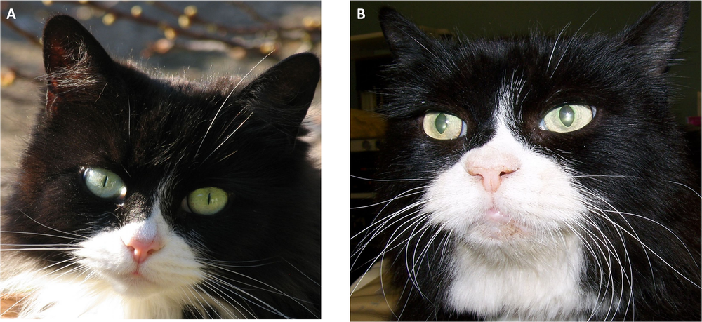 Example of a cat before and after onset of HS-induced changes  (PLoS One)