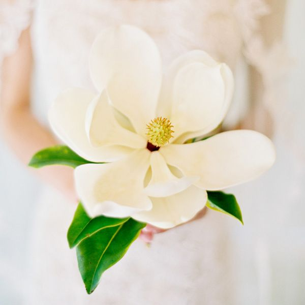 Magnolia - Click through for photo credit