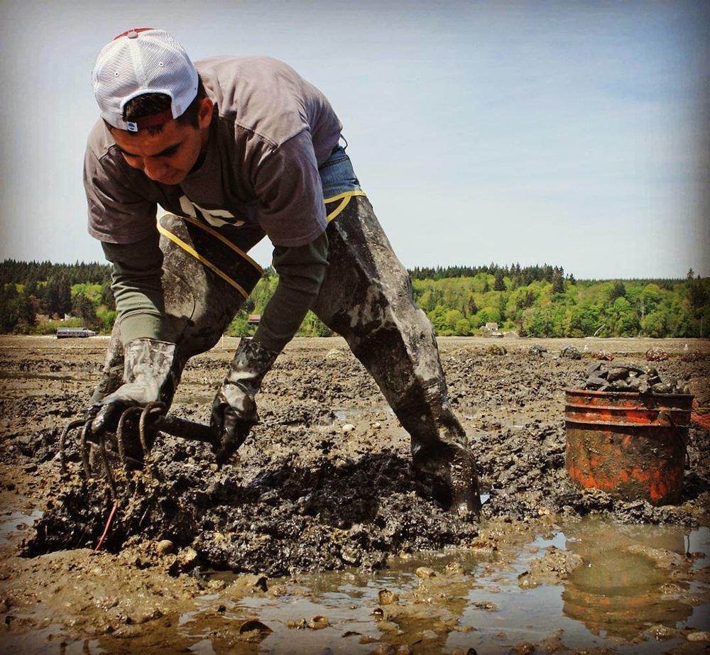 mudflat_harvest.jpg