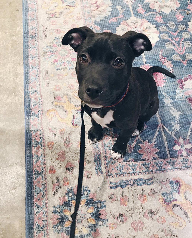 ZERO-WASTE-DOG