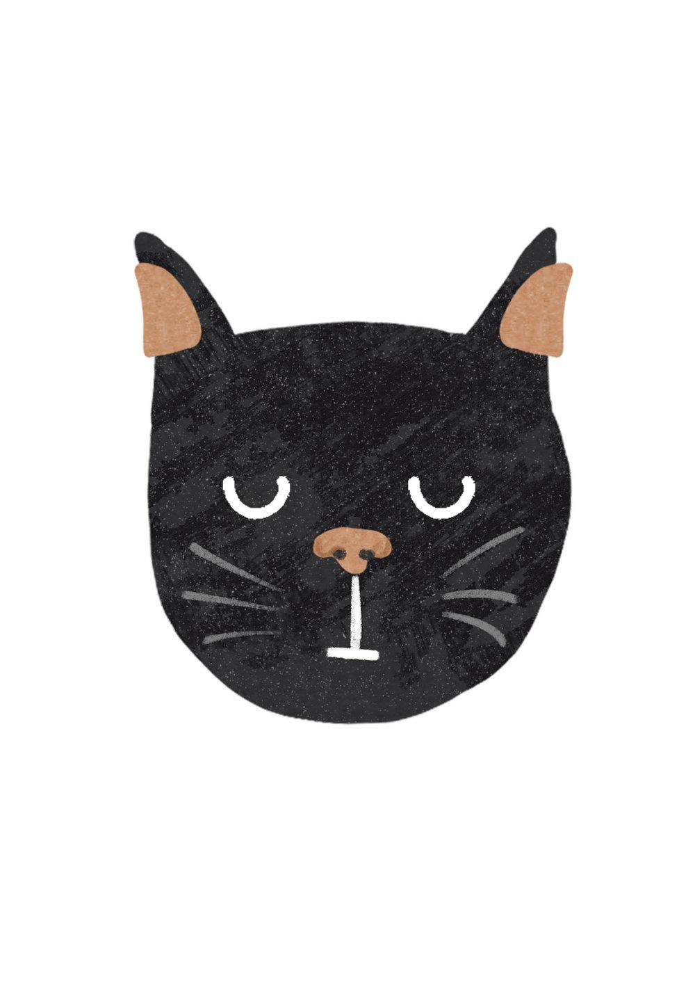 a5 cat.jpg