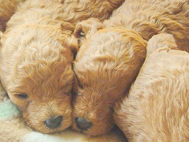 Cuddle, Cuddle, Cuddle