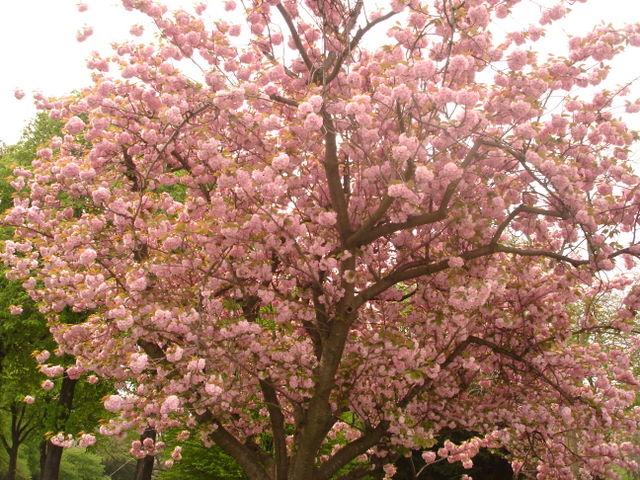 Spring Flowers, Uzes