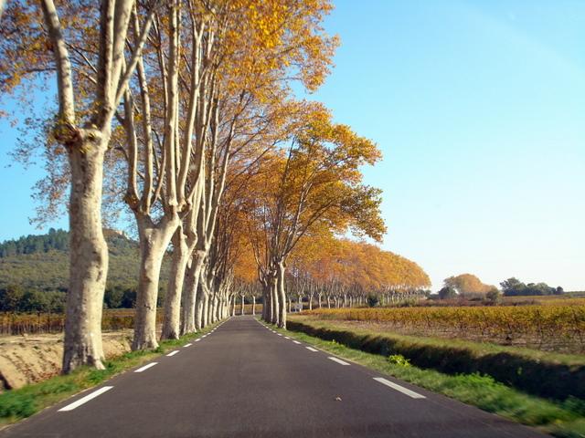 Autumn Trees, Uzes