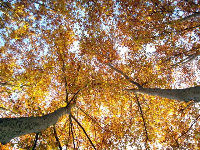 Autumn in the Costa Brava, Spain