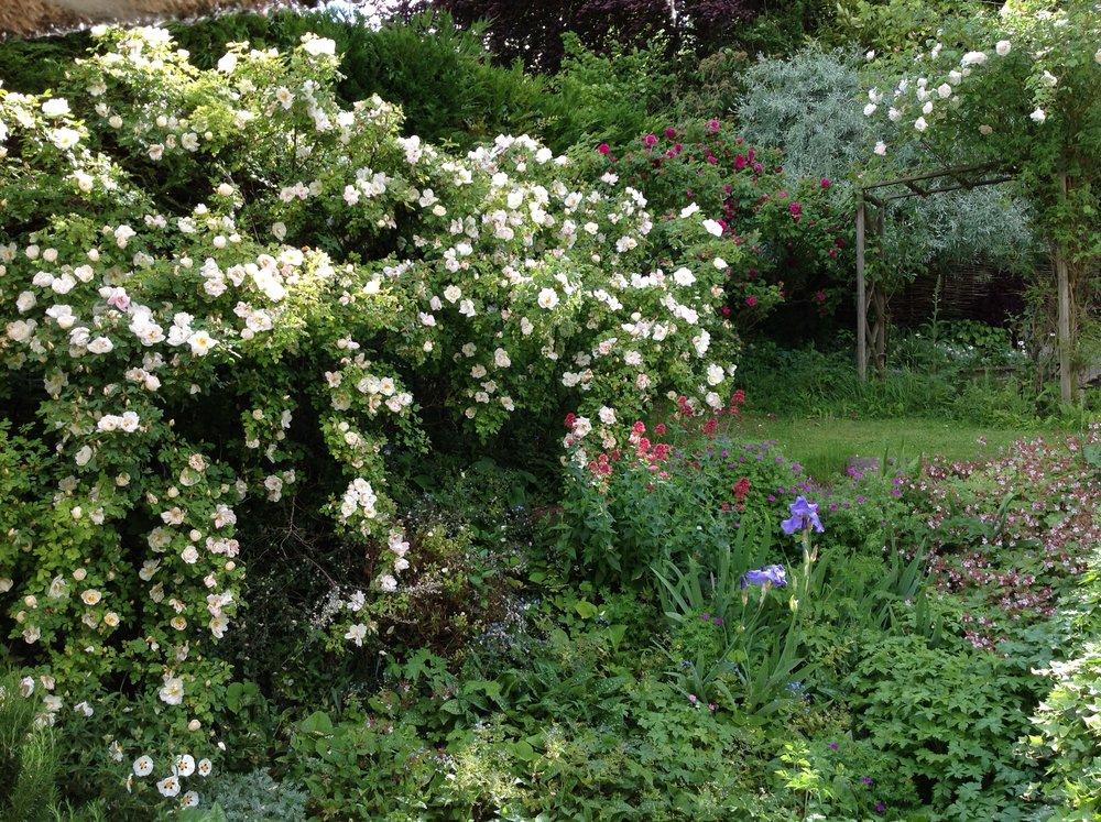 wild-garden-flower.jpeg