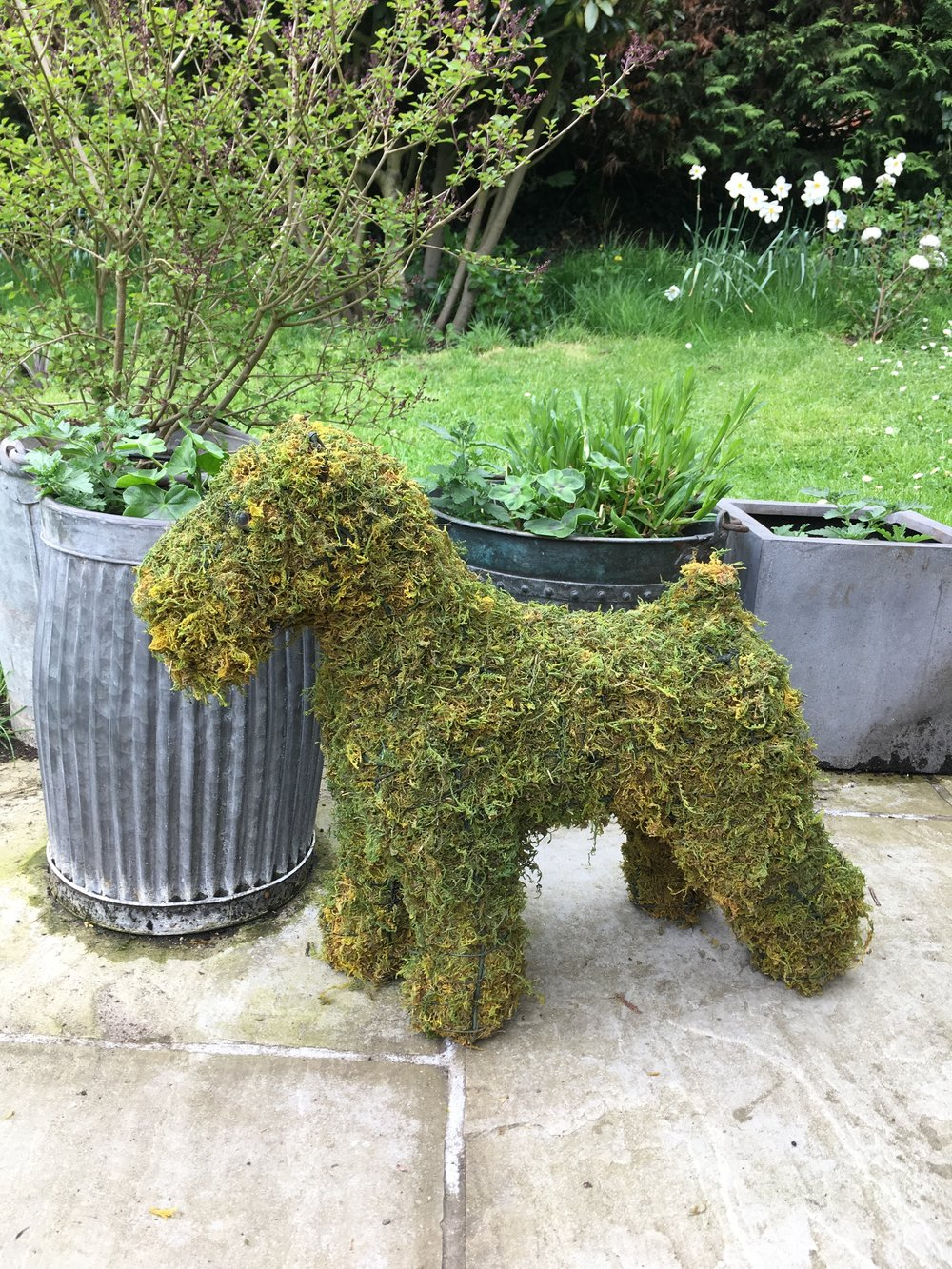 Moss Dog.jpg