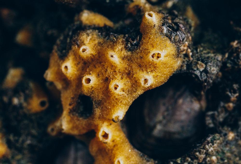 Breadcrumb sponge-Constellation Beach