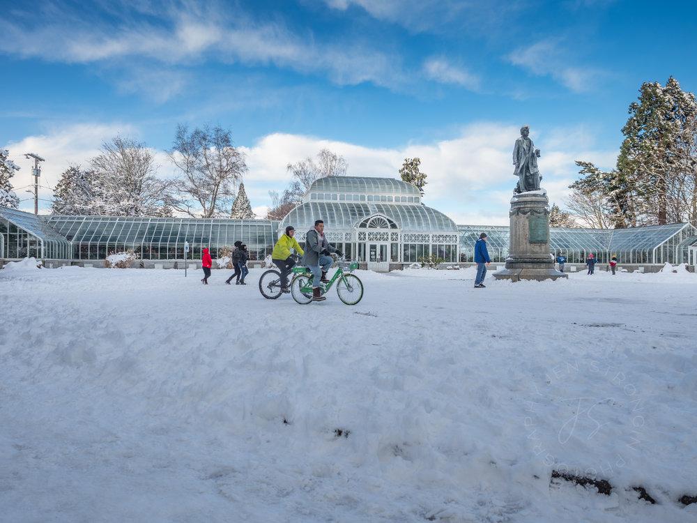 snow scene4.jpg