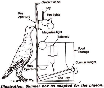 Pigeon Skinner.png