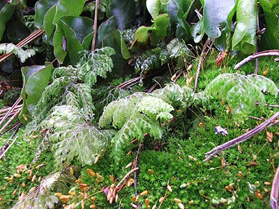 ferns and mosses.jpg