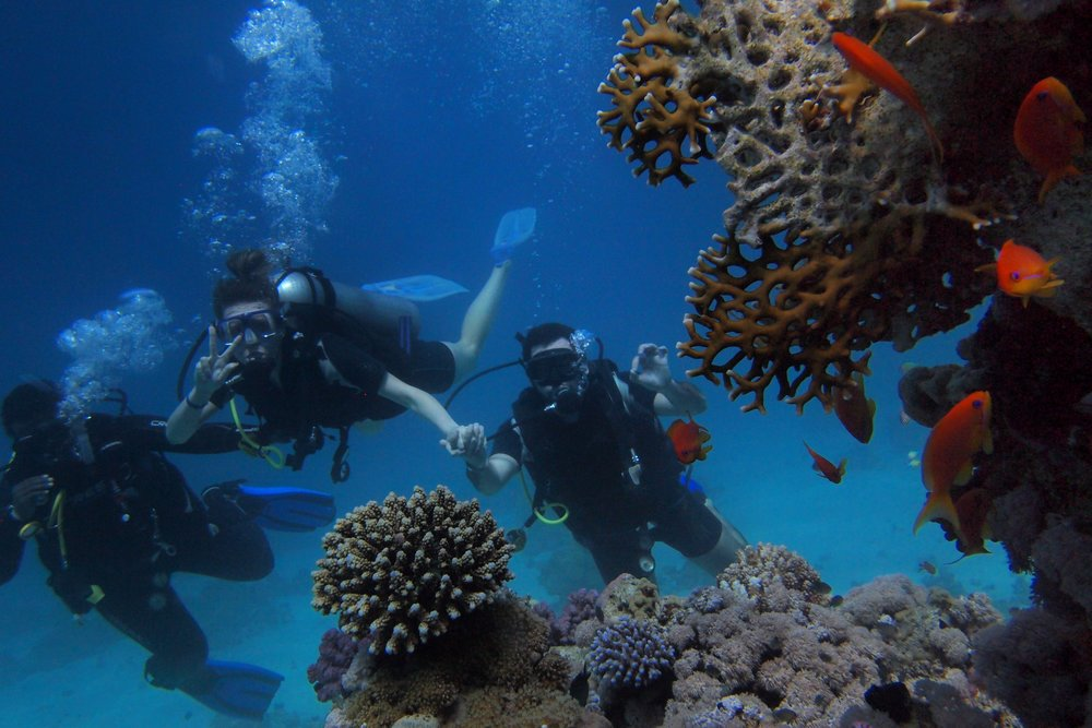 corals-deep-deep-sea-1540108.jpg